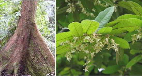 Daftar Tumbuhan Langka dan Terancam Punah di Indonesia