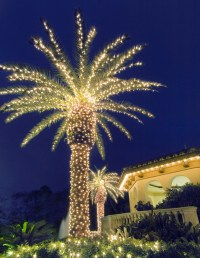 Lighting Texas palms trees creates a paradise in your ...