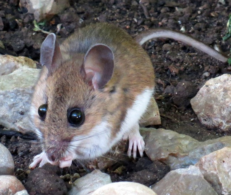Alamosa News | Hantavirus linked death confirmed