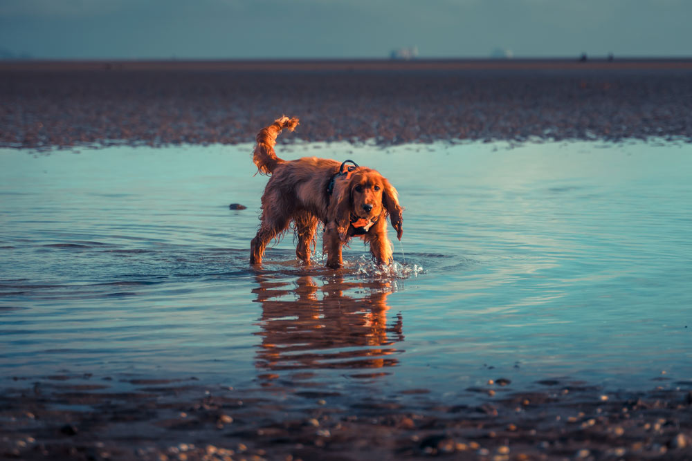 Pippa on Sandymount Beach