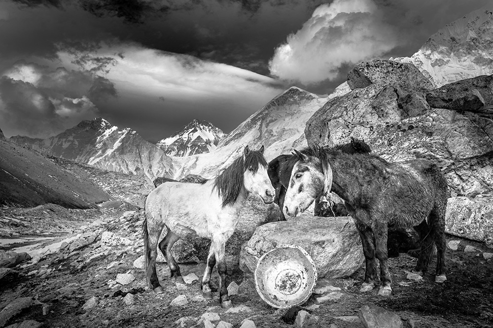 Horses at basecamp, Nepal
