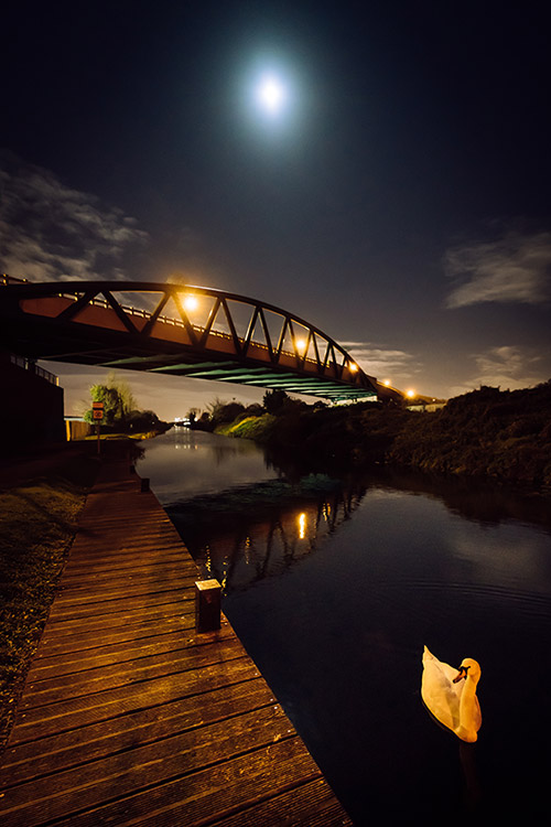 Royal Canal Swan at Night - Dublin Photo Print