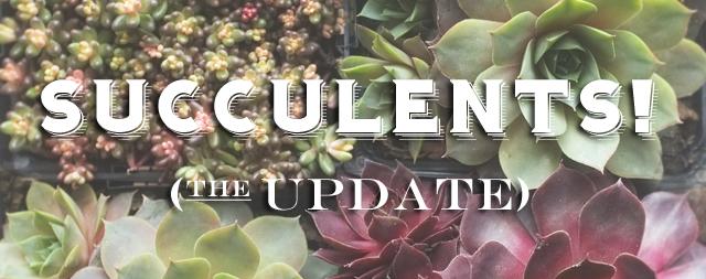succulent update