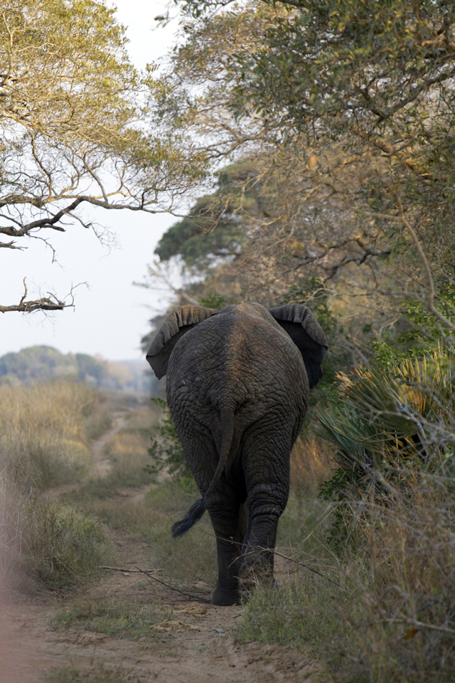 AFRICA_elephant_640