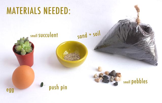 egg succulent diy_materials