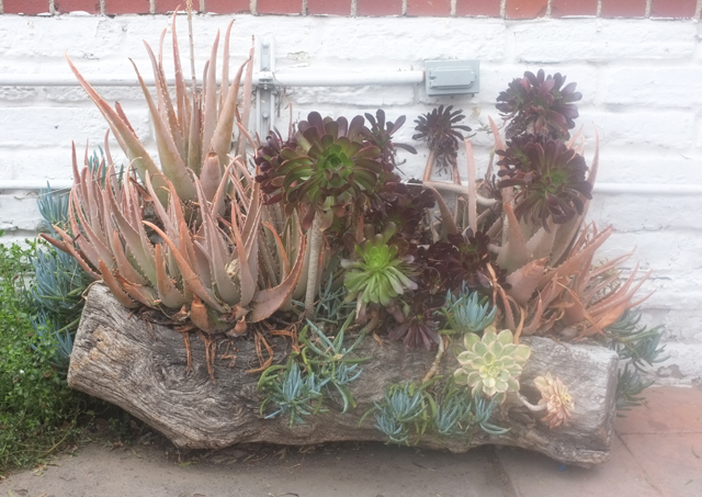 san diego succulent box
