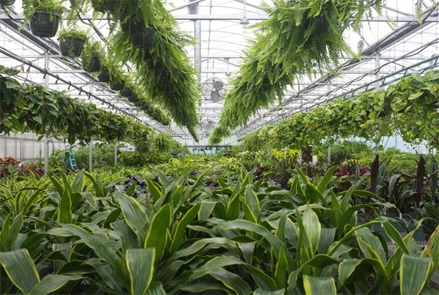 Cincy Design Plants