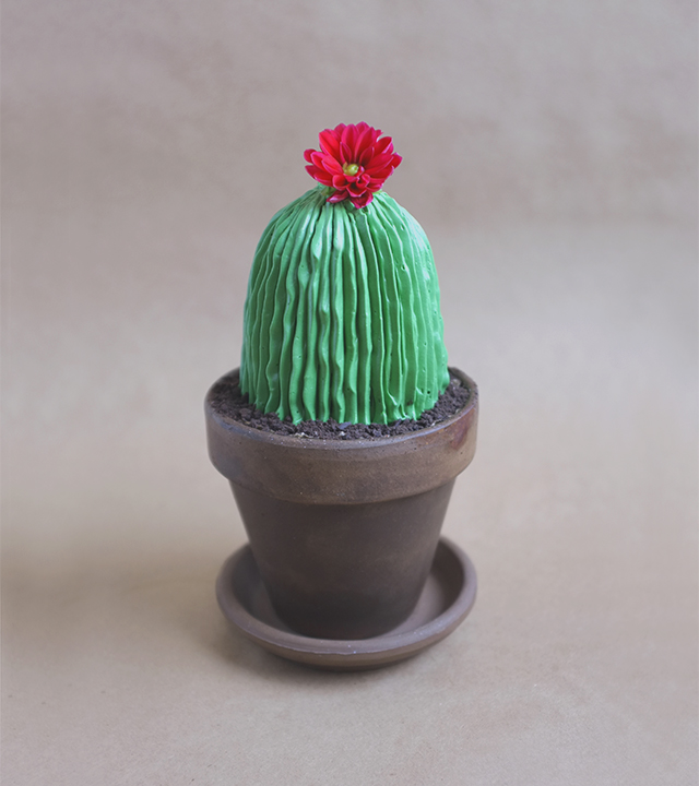 Cacti Cake 2
