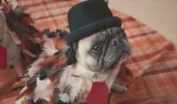 Craft On: Turkey Dog Costume  Alana Jones-Mann