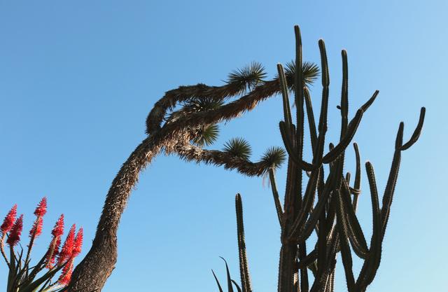 CactusSky