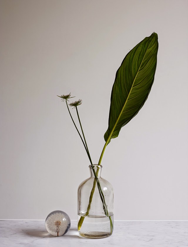 houseofc-elledecoration-greenhouse-4