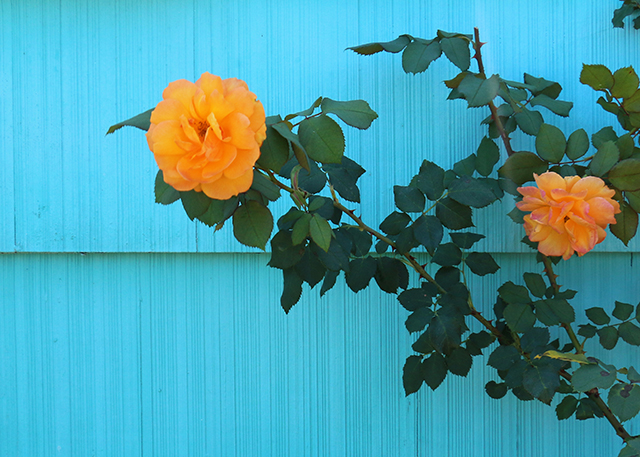 Contrasting Colors