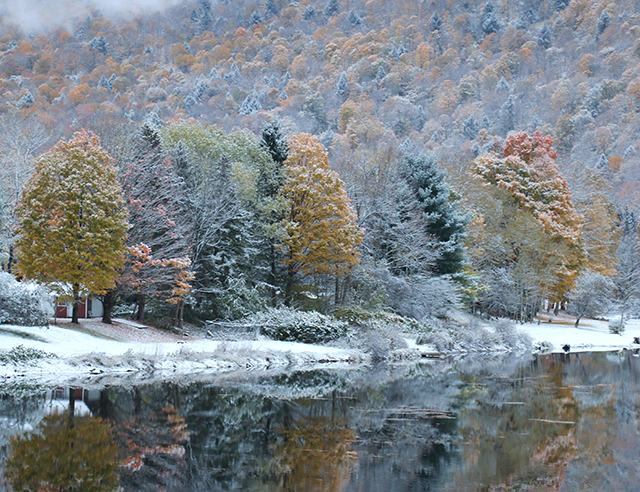 Fall Trees in Snow