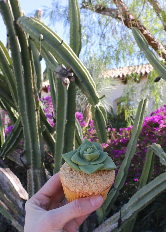 Succulent Cupcake in Cacti