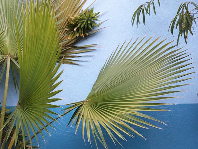 Palms on Blue