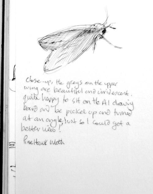 sketch book moth