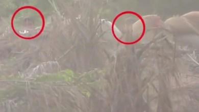 Photo of شاهد الفيديو : مصرع 13 حوثياً بنيران القوات المشتركة في جبهة الساحل الغربي بالحديدة