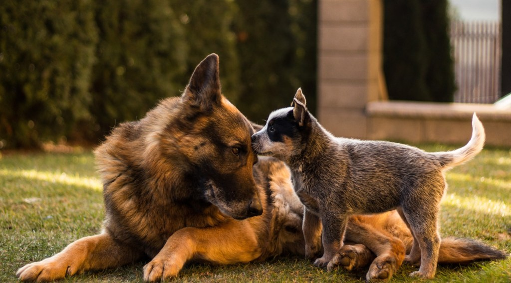 New Study Demonstrates Dogs Help Children Recover from Stress