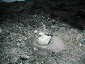 The masked booby looking very relaxed at our presence
