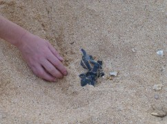 An emergence of hatchlings