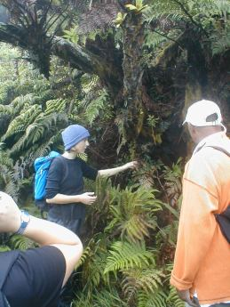 Rebecca explaining about the tree ferns