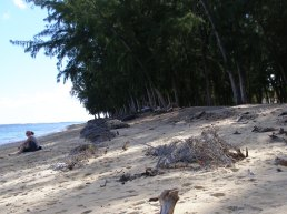 ...and causing the erosion of the beaches since they only have shallow roots