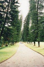 Drunken Pines