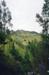 Las Palmas de Cera