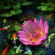 Inhabited Water Lily