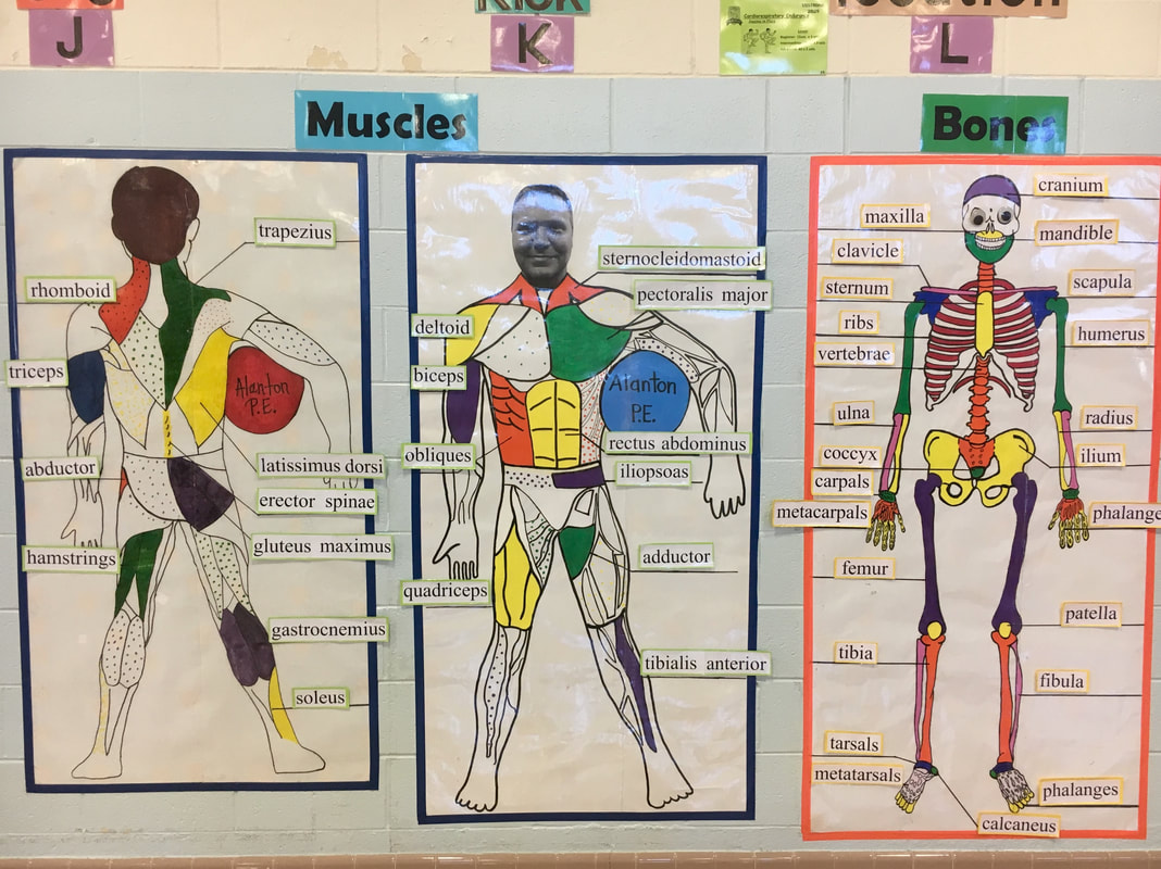 Bones Amp Muscles Study Sheets