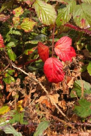 autumn-colours1