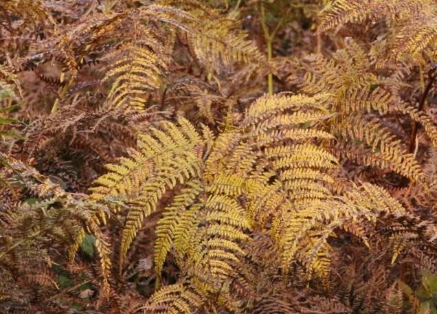 autumn-colours5