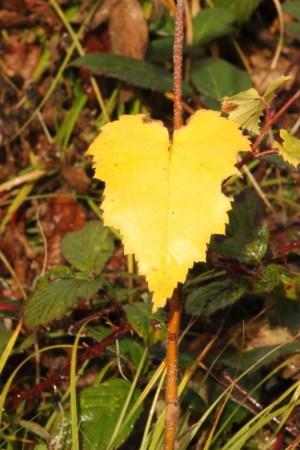 autumn-colours6