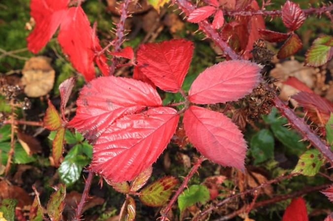 autumn-colours7