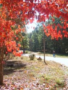 Fall walk along Alapine's main road