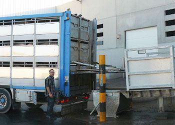 rampas de carga para el ganado