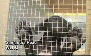 Florida shelter, Alaqua Animal Refuge, takes in 73 Great Danes