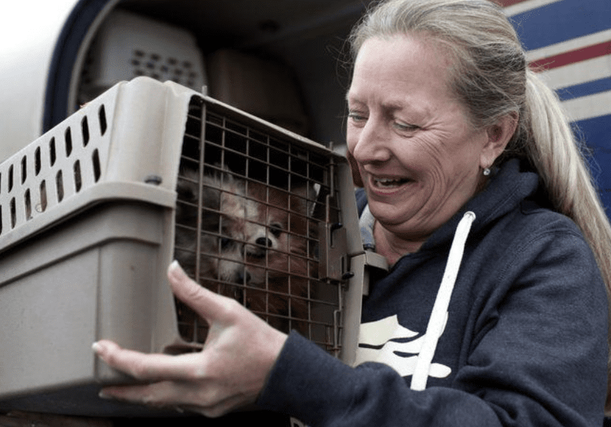 Groups Rescue Pets Left Homeless after Hurricane Michael
