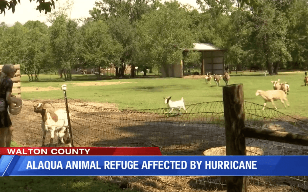 Alaqua Animal Refuge Had to Swim their Farm Animals to Safety after Sally Flooding