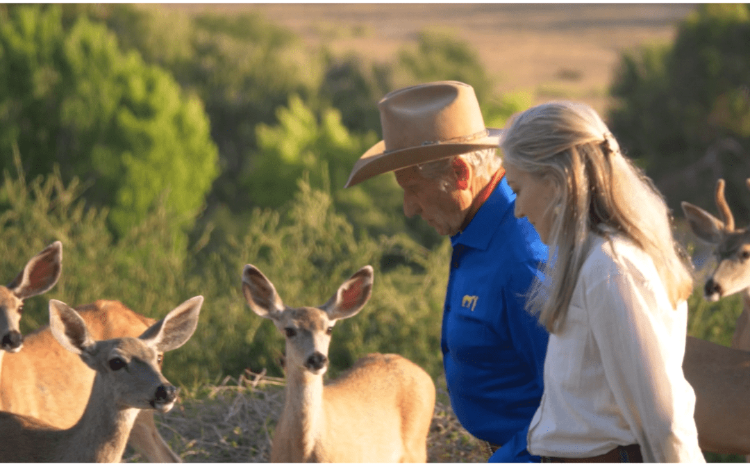 World-renowned Animal Advocate Laurie Hood Unveils New Project