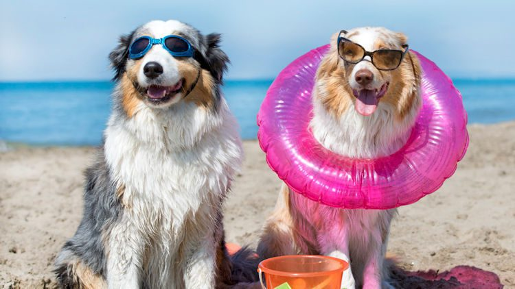 Pet Friendly Hotels for National Dog Day, August 26