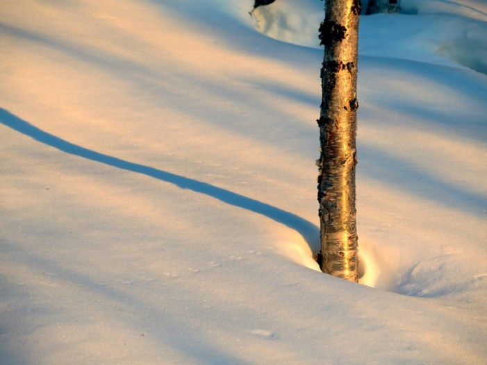 Snow-Starved Alaska not the Normal State