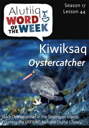 Oyster Catcher-Alutiiq Word of the Week-April 27