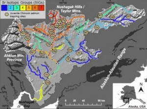 Map of the Nushagak River showing various strontium isotope groups. (Click on the photo to enlarge)Sean Brennan, UW