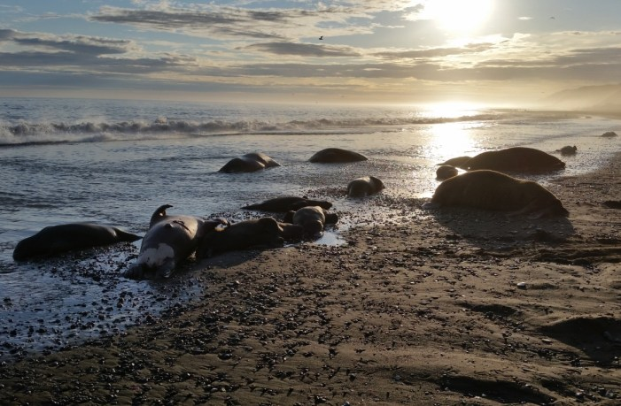 Point Hope Walrus Hunters Sentenced for Federal Violations