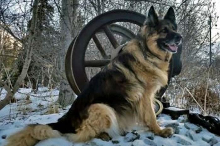 Furry, Four-Legged Trooper Retires