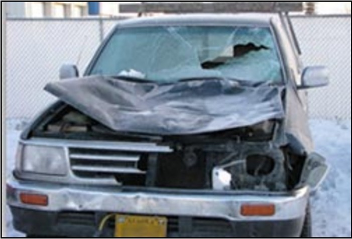 Motorists Take Heed: Winter Conditions Increase Moose-Automobile Collision Risks