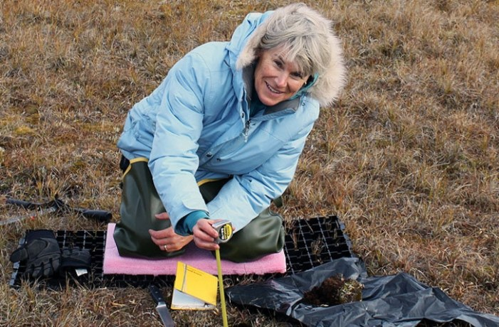 Rapid Ice-Wedge Melting Accelerates Permafrost Decline