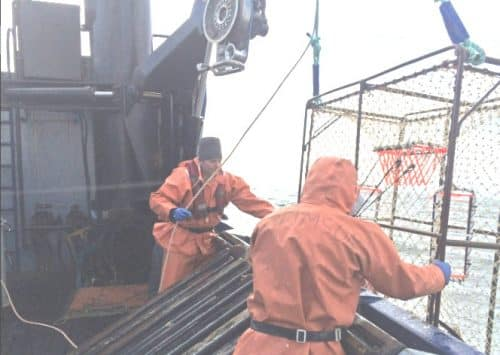 Groundfish Fisheries for P-cod and Pollock Opening Soon in PWS