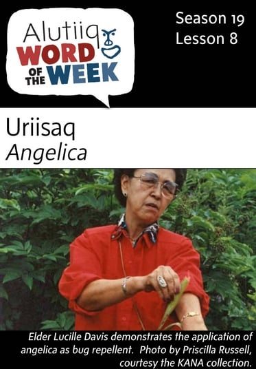 Angelica-Alutiiq Word of the Week-August 21